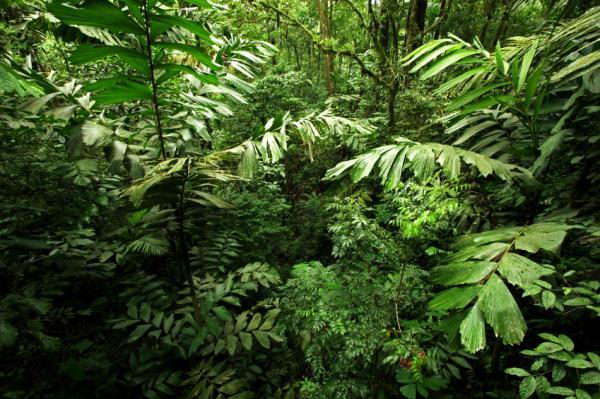 beautiful jungle - Rainforest facts for kids