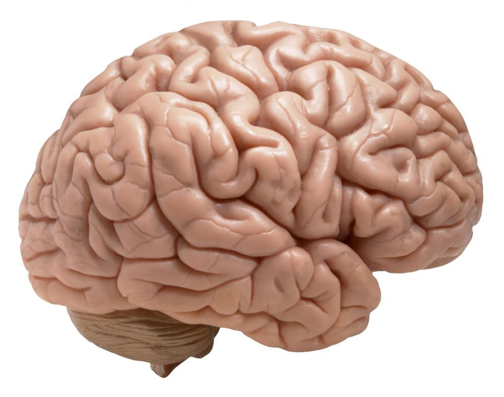 human brain diagram for kids - photo #36