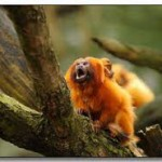 Amazon Rainforest Facts for Kids – Tropical Rainforest Facts