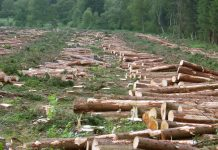 Deforestation-facts-for-kids