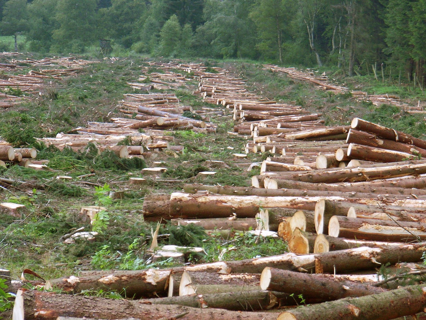 causes of deforestation for kids