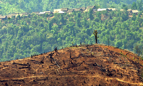 Deforestation facts for kids