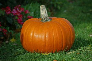 Pumpkin Facts For Kids