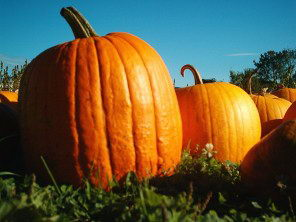 Pumpkins - Pumpkin Facts For Kids