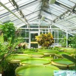Greenhouse Effect for Kids | Facts and Explanation