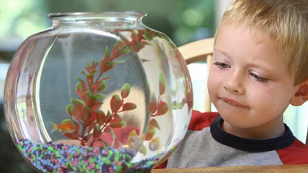 pet fish facts for kids