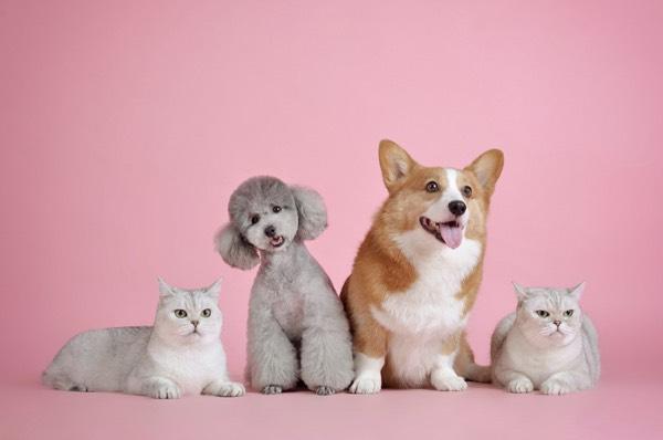 CBD-Oil-for-Pets